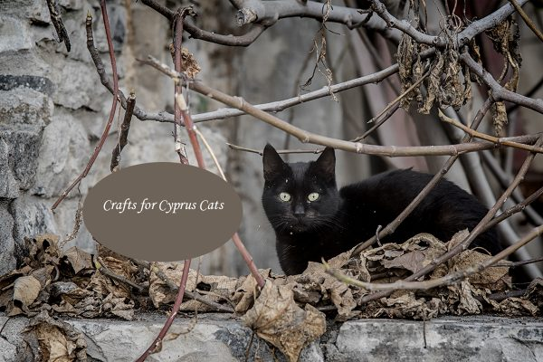 Crafts for Cyprus Cats!